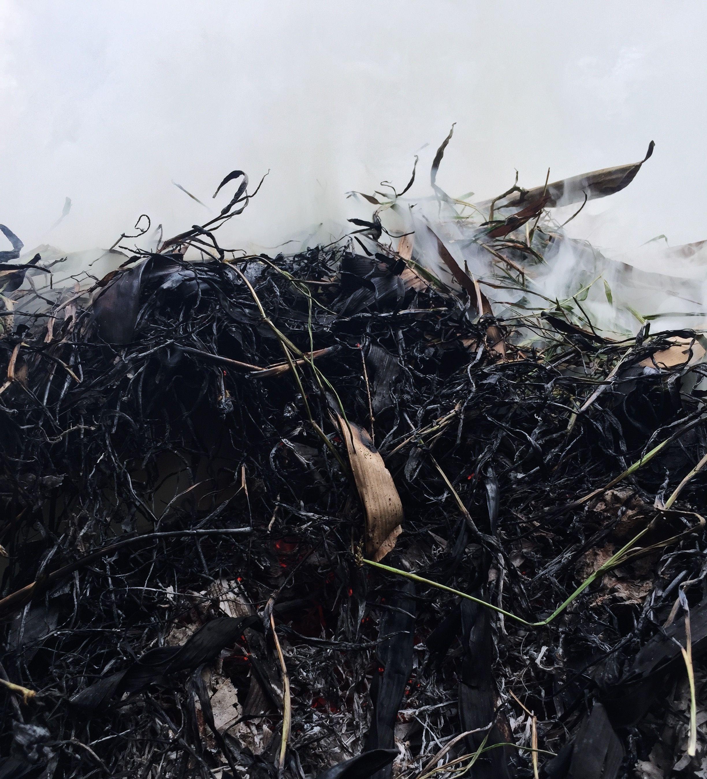 Compost orgánico ecológico