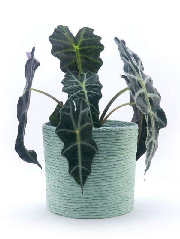 Cubremacetas de tela reciclada planta verde