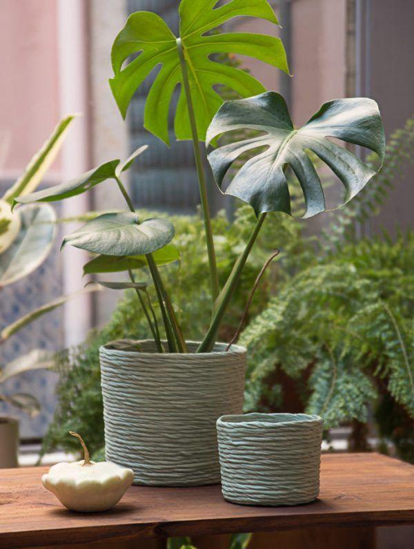 Plantas con cubremacetas reciclado verde