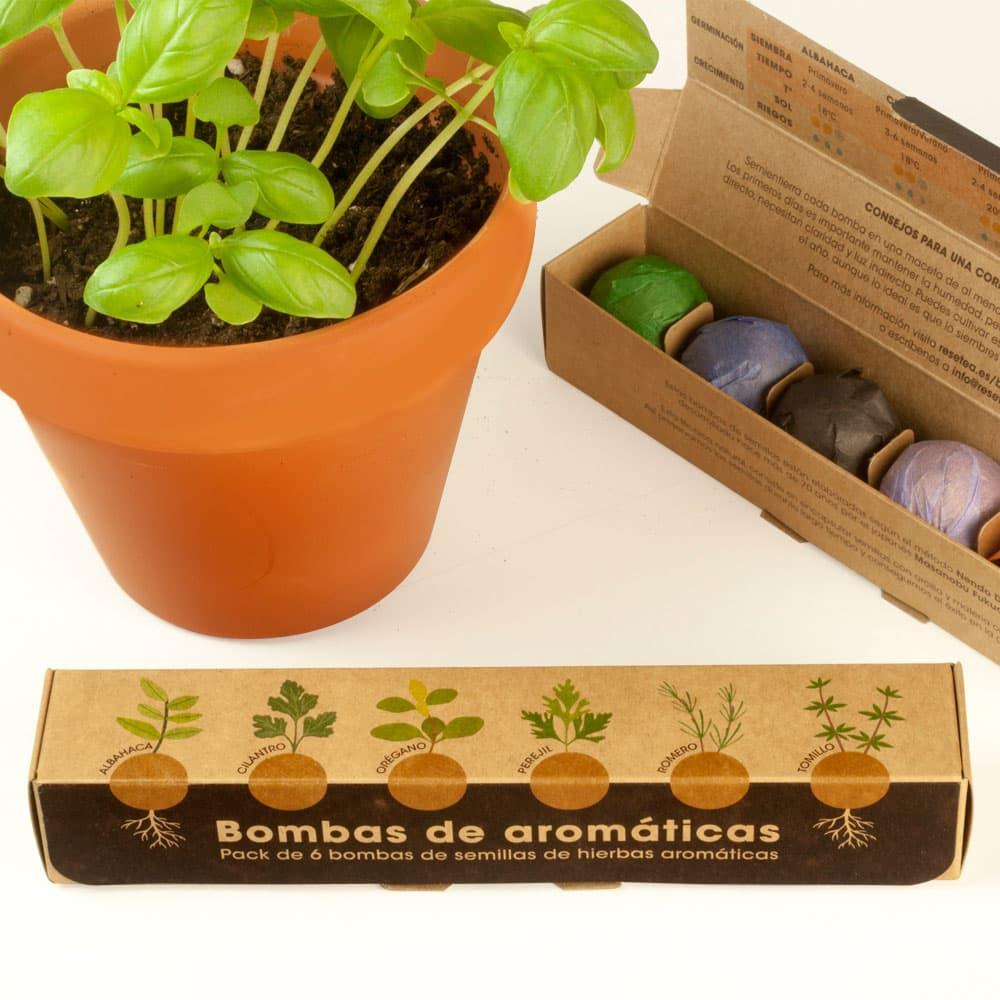 Hierbas aromáticas plantar fácil