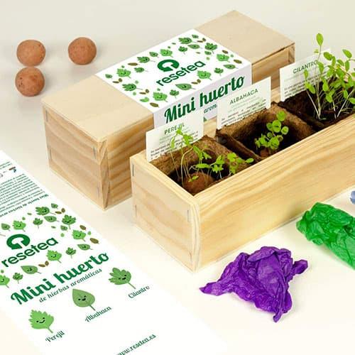 Mini cultivo de hierbas aromáticas