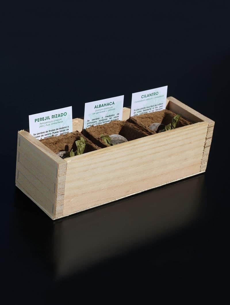 Mini huerto de perejil, albahaca y cilantro
